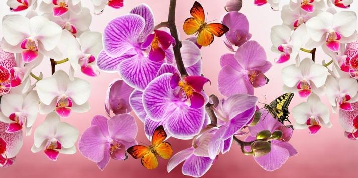 orchids-866609_960_720