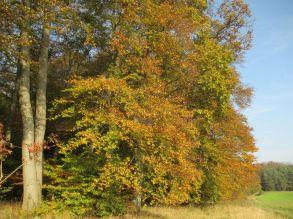Am Alten Wald 02