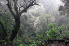 08 Der Wald der Ahnen - Flechtenwald