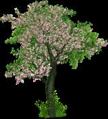 Baum der Blüten px.png