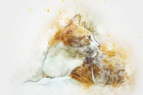 Katze px