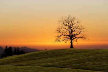 Baum einsam